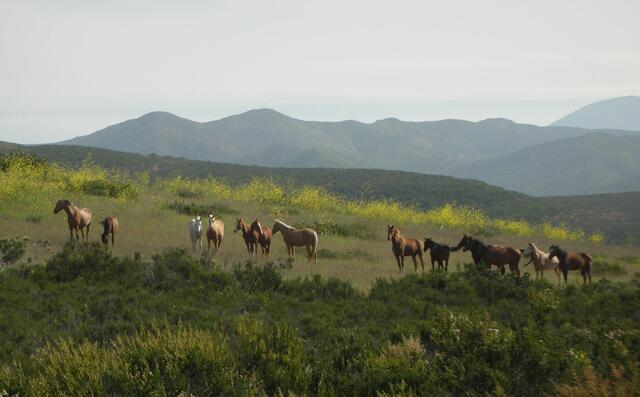 Tijuana Baja California All The Pretty Horses Rescue Rides San Diego California Travel